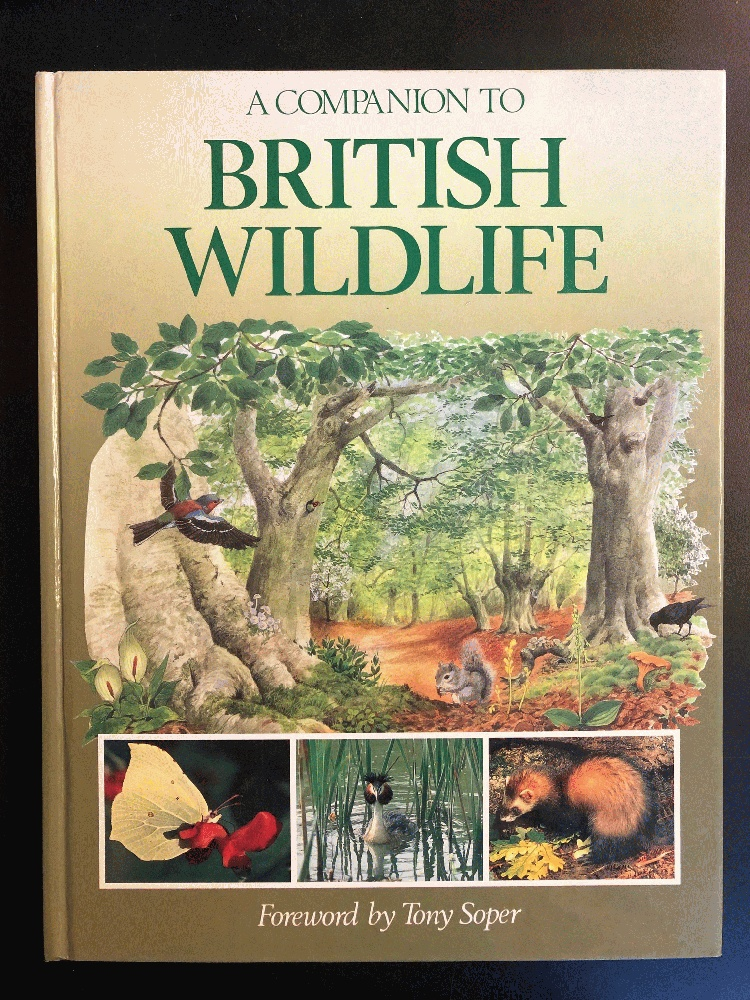 Image for A Companion to British Wildlife